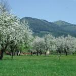 Streuobst im Natur- und Geopark Steirische Eisenwurzen